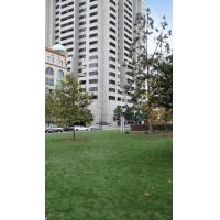 Quality Cat artificial grass for sale