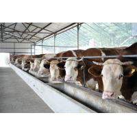 Quality Energy-efficient Light Weight Steel Structural Framing Cowshed Systems With Single Long Span for sale