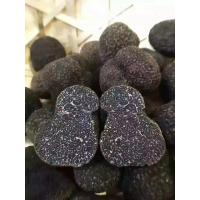 Quality Factory Price Premium Fresh Wild Black Truffle 1-3CM from China for sale