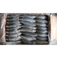 Quality Indian Mackerel for sale