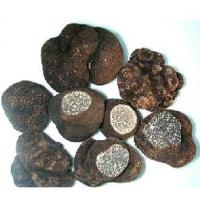 Quality Frozen Truffle/Black Truffle for sale