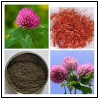 Quality Red Clover Extract,soflavones 8% 20% 40%,CAS No.:491-80-5 for sale
