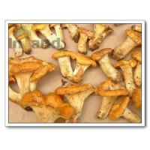 Quality Mushrooms,Chanterelle,Chanterelle Mushrooms,Cibarius,Mushrooms for sale