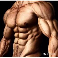 White Powder Cutting Cycle Steroids Methyldrostanolone For Muscle