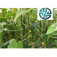Quality Rich In Protein Cucumber Family Plants Clearing Away Heat And Toxic Material for sale
