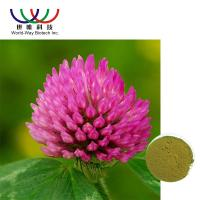 Quality Trifolium Pratense L Red Clover Extract Green Powder Relieve Menopausal Symtoms for sale