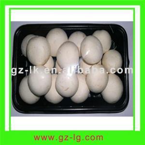 China Agaricus Bisporus mushroom on sale