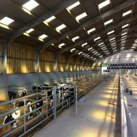 Quality Low cost Cow Feeding Industry Steel Structure Shed with Modern Design for sale