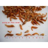 SD Gammarus Daphnia Freeze Dried Bloodworms