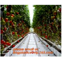 Quality Film Covering Tomato Planting Greenhouse,Tomato Greenhouse film, Plastic Polyethylene sheet 6 mil 4 year UV Resistant cr for sale