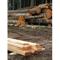 Lumber and Logs