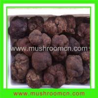 Quality Fresh Truffle for sale