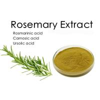 Quality 26.3% Diterpenes Rosemary Extract Rosmarinus officinalis for sale