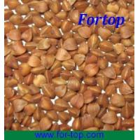 Quality Roasted and Raw Buckwheat for sale