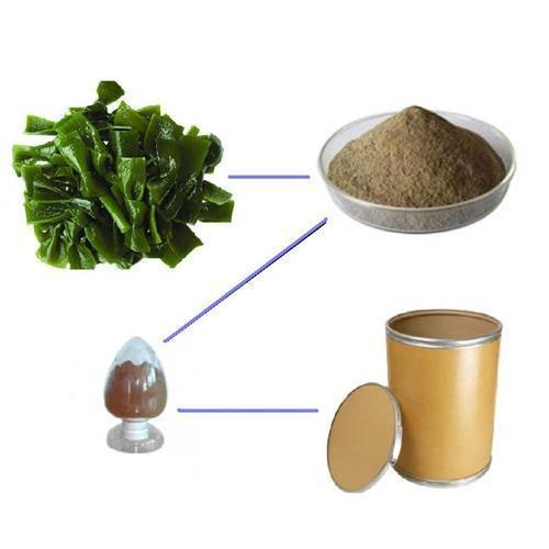 Buy Supply kelp extract kelp powder  Fucoxanthin at wholesale prices