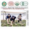 Buy cheap Organic Ganoderma Lucidum from wholesalers