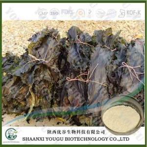 Quality China Brown Seaweed Extract Fucoidan 95%, 85%/konbu fukoidan powder/kelp extract fuicodan Supplier for sale
