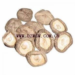 Quality Shiitake Mushroom for sale