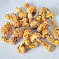 Quality Wholesale wild mushrooms, Brazil for sale