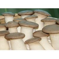 Quality Eryngii Mushroom for sale