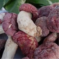 Quality Wholesale authentic wild red mushrooms for sale
