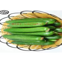 Quality Healthy Mini Cukes Cucumber Control Blood Pressure And Manage Diabetes for sale