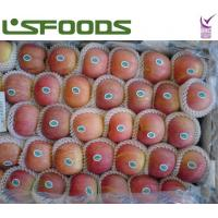 Quality fresh red fuji apple for sale