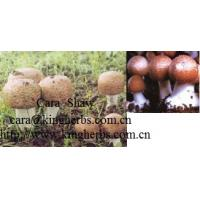 Quality China Agaricus Blazei Mushroom Extract for sale for sale