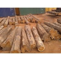 China Great quality Teak Wood and Tali Wood Padouk Pine Boxwood Azobe Wood Timber Logs on sale