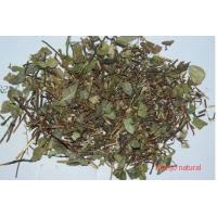 Quality Trachelospermum jasminoides(Lindl.) Lem.whole plants,Luo Shi,Chinese herb for sale