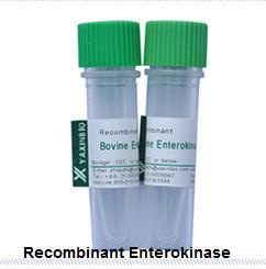 Quality Recombinant Enterokinase  E.coli Recombinant Enterokinase Supplier for sale
