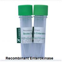 China Recombinant Enterokinase Expressed in E.coli Recombinant Enterokinase with Animal Origin Free Supplier on sale