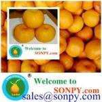 Quality mandarin orange,fresh fruit for sale