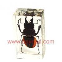 Quality Resin Real insect in Paperweights for sale