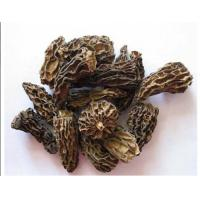 Quality Dried Morel without stem for sale
