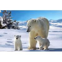 Quality White Bear 3D Plastic Printing Services Fancy Animal Designs for Decorational for sale