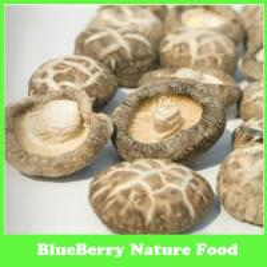China Dried Mushroom Sources,Cultivated Shiitake Mushroom on sale