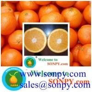Quality navel orange,fresh orange for sale
