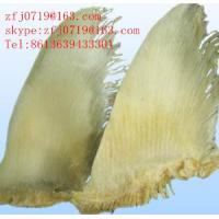 Quality Chondroitin Sulfate(Shark) for sale