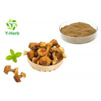 China Brazil Mushroom Extract Powder Agaricus Blazei Murrill Extract Polysaccharides Powder on sale