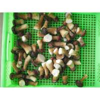 Quality IQF belotus edulis in Yunnan China for sale
