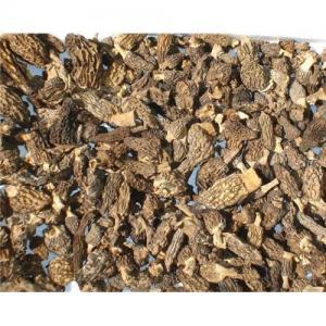 Quality Morels mushroom for sale