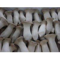 Quality Fresh Eryngii Mushroom for sale