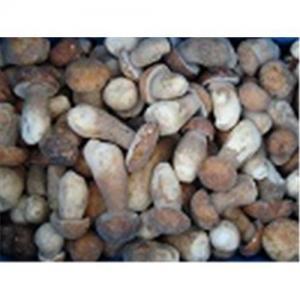 Quality Frozen boletus edulis,wild mushrooms for sale