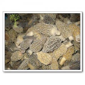 China Mushrooms,Morel Mushroom,Wild Mushrooms on sale