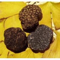 Buy cheap Mushroom Truffle from Wholesalers