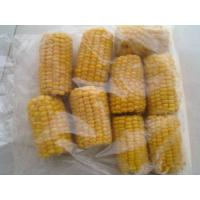 Quality IQFSweetCornS… for sale