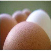 Quality Eggs for sale