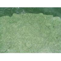 Quality Individually Quick Frozen(IQF) basil leaf Individually Quick Frozen(IQF) basil leaf for sale