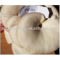Quality Oyster Mushroom for sale